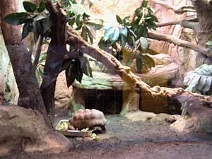 Gran terrario de tortugas
