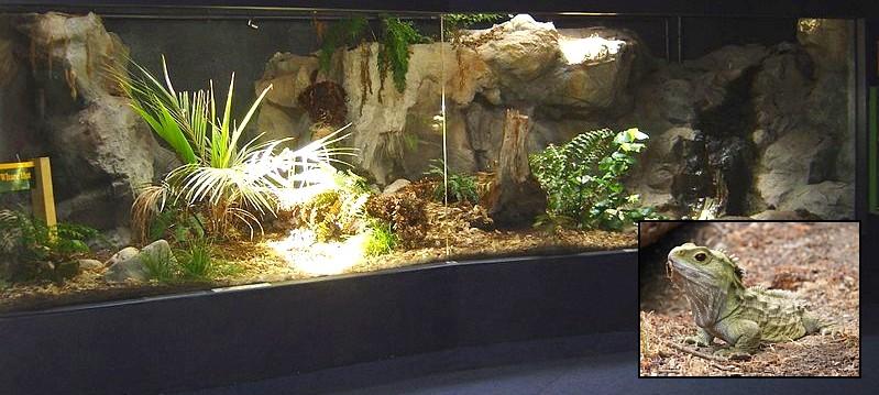 Terrario de tuátaras en el Napier Aquarium