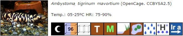 Ambystoma_tigrinum_mavortium