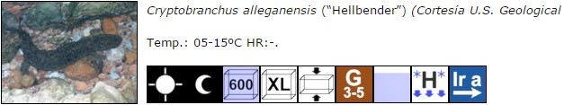 Cryptobranchus alleganensis