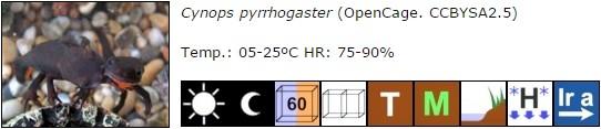 Cynops pyrrhogaster