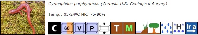 Gyrinophilus porphyriticus