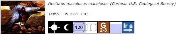 Necturus maculosus maculosus