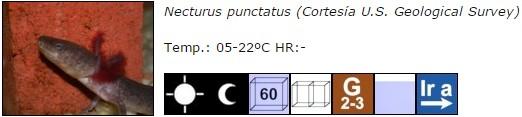 Necturus punctatus