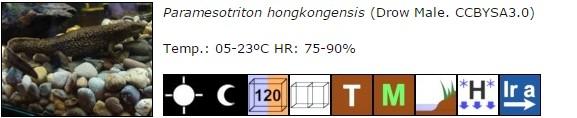 Paramesotriton hongkongensis