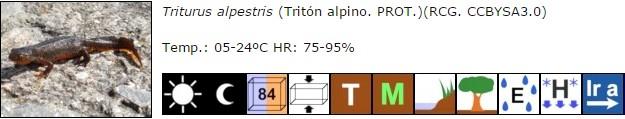 Triturus alpestris