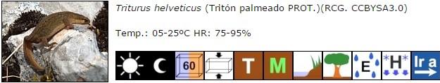Triturus helveticus