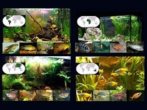 glosarios peces portal