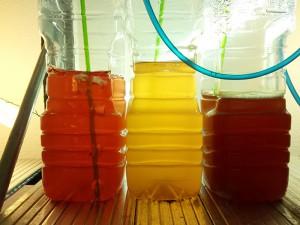 Cultivos de fitoplancton