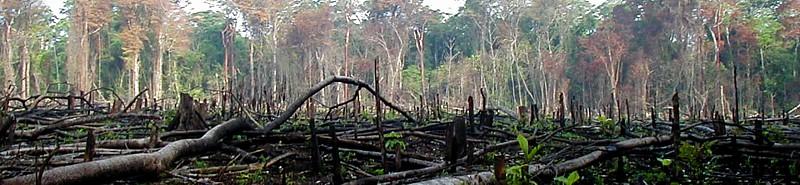 Desforestación por quema