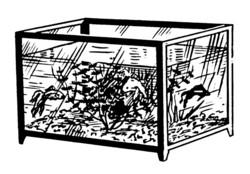 Esquema acuario