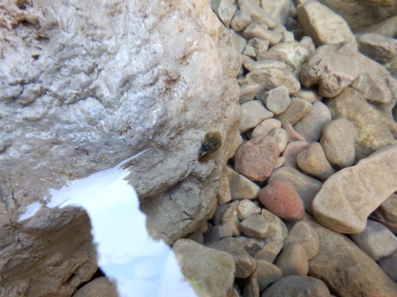 Matarranya, moluscos en zona afótica