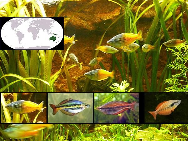 peces oceania destacada