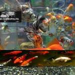 aguafria peces destacada