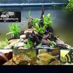 peces agua templada destacada