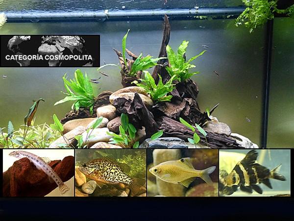 Art culos sobre categor as agua dulce for Los mejores peces de agua fria