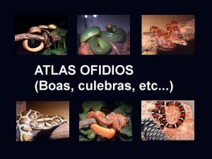 Atlas serpientes
