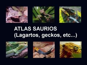 Atlas lagartos