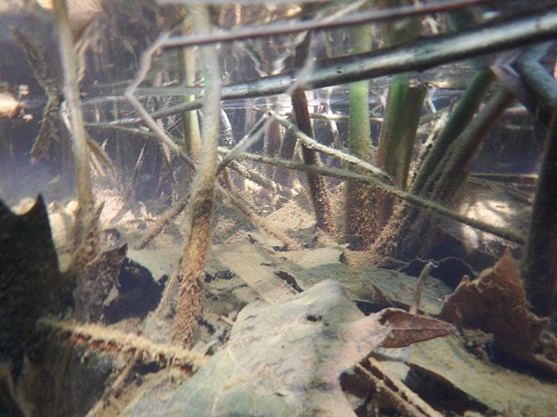 Zonas inundables, Bañolas