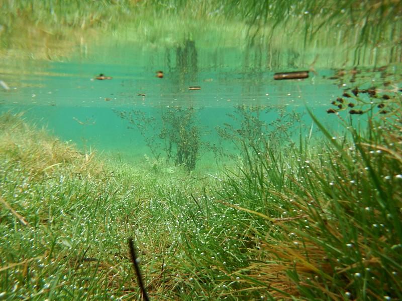 Clot inundado, pradera