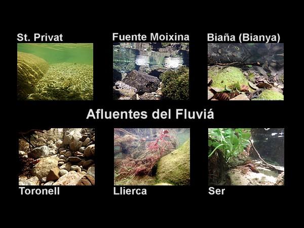 Afluentes del Fluviá (Fluvià)