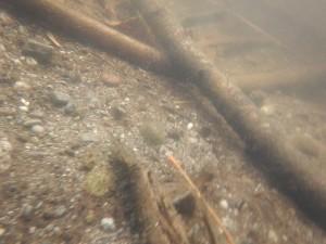 Meandros Fluviá, el suelo