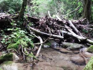 Represas naturales, Biaña