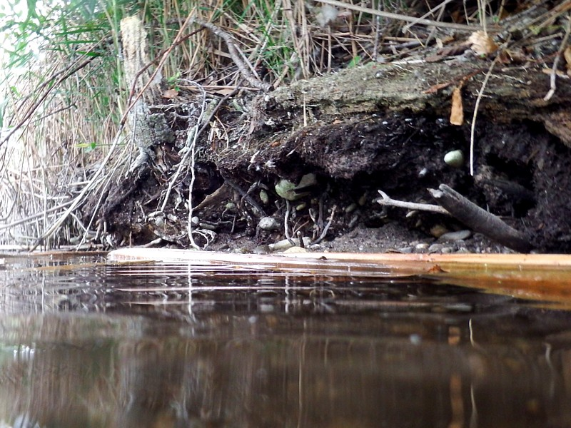 Talud de ribera meandro izquierdo Fluviá