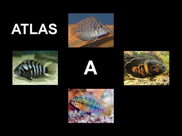 Atlas destacada A