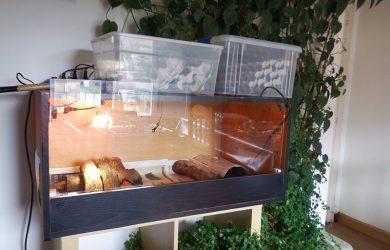 Criadero cucaracha argentina
