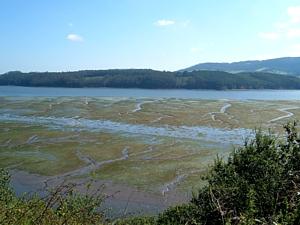 Desembocadura, estuario