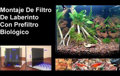 Art culos sobre acuarios - Montaje de acuarios ...