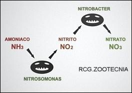 Esquema ciclo nitrógeno