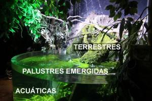 Plantas paludario