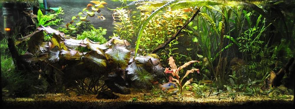 Decoración acuario
