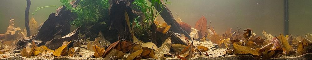 Biotopo bosque de galería asiático