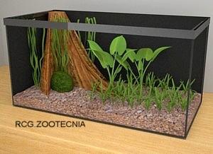 © Zootecnia doméstica. Der. Res.