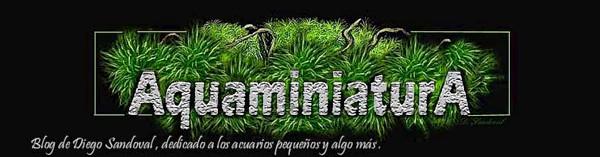 Blog Aquaminiatura