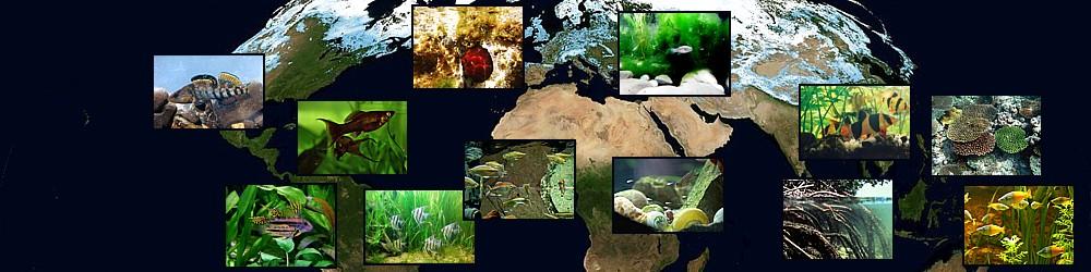 Biotopos del mundo, panorámica