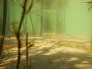 Biotopos, estuario