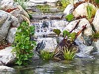 Cascada estanque
