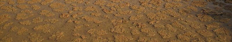 Charca ciprinodóntidos