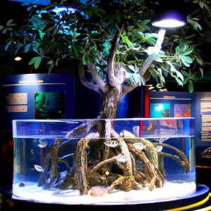 Acuario manglar