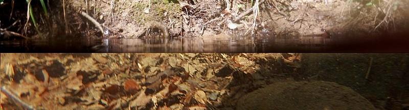 Biotopo acuático bosque caducifolio