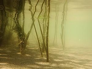 Biotopo estuario