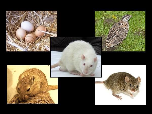 Alimentacion mamiferos aves
