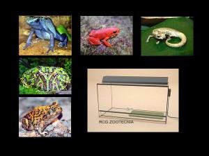Anfibios vida terrestre