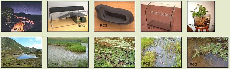 Biotopo estanque