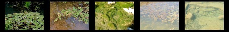 Biotopos acuáticos
