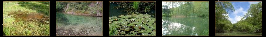 Biotopos reptiles vifa anfibia